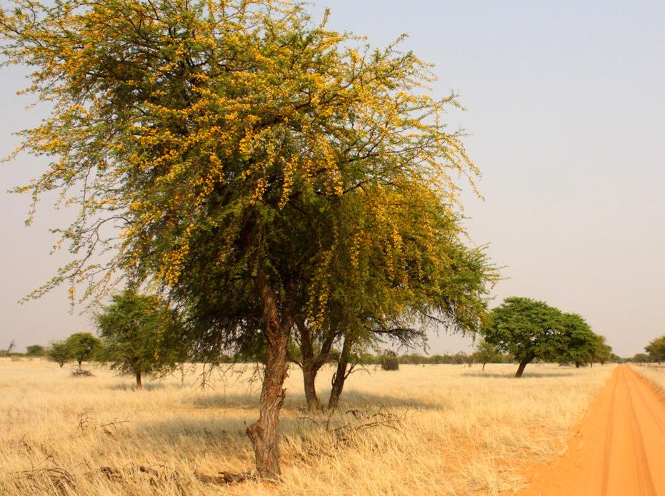Kalahari springtime