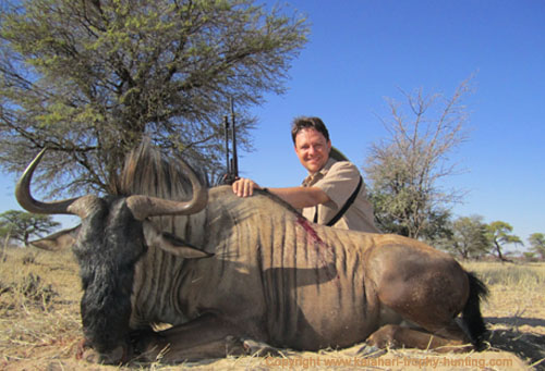 Kalahari Blue Gnu hunt, Namibia
