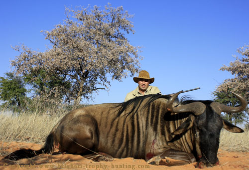 Blue Gnu Hunt Namibia