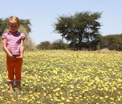 Kalahari flowers