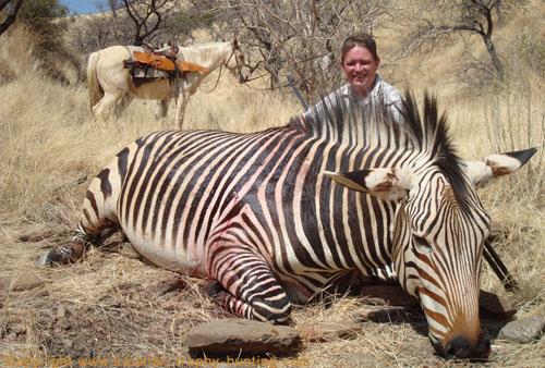 Zebra Hunt Namibia