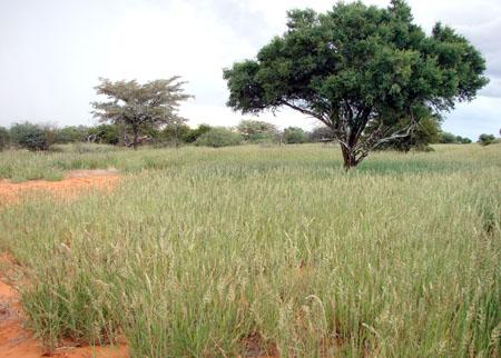 Kalahari Veld March '09