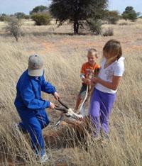 Springbok Hunt, Namibia