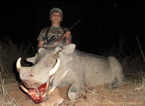 Warthog Hunt, Namibia