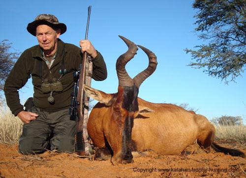 Kalahari Red Hartebeest hunt, Namibia