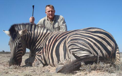 Burchell's Zebra Hunt Namibia