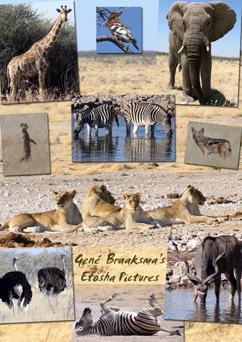 Gené Braaksma took these pictures in Etosha, Namibia