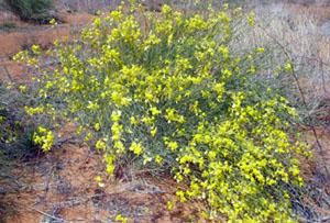 Kalahari climate