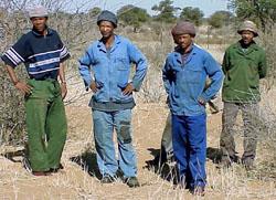 Kalahari trackers