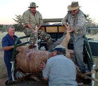 Kalahari biltong hunting