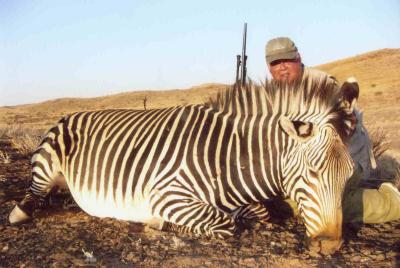 My Mountain Zebra, hunted in the Namib Desert