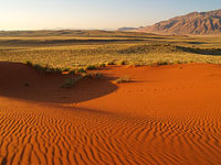 Namibia desert with grass,Namibia travel