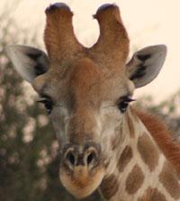 Contact Uitspan Hunting, Namibia
