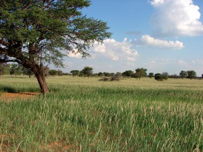 Kalahari Desert in March